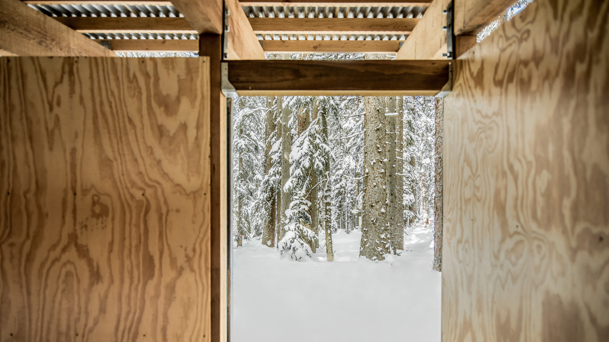 Ccy Architects Snowmass Lost Forest Follies Connecting To Nature